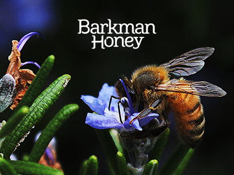 Barkman case study cover photo with bee on flower